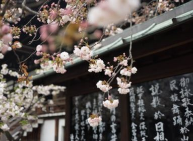 cseresznyevirág és japán pag
