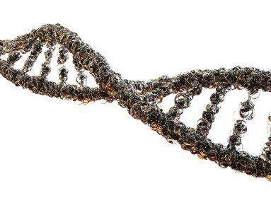 DNS-lánc az élet továbbadója