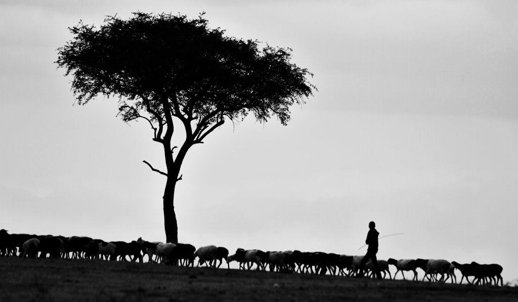 pásztor nézet)