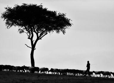 Egy akol lesz és egy pásztor